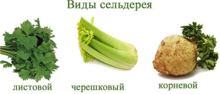 Салат из сельдерея и яблока Для тех, кто хочет полюбить сельдерей